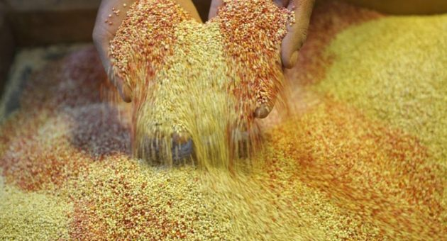 UK quinoa imports surge in 2015 as Waitrose reports sales jump