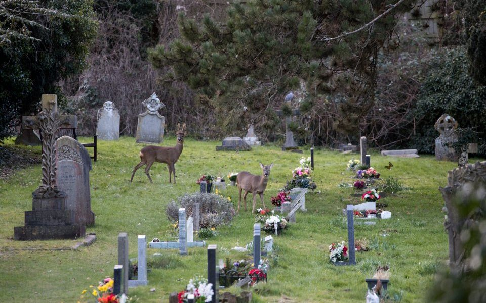 Dignity welcomes watchdog's probe into high funeral prices