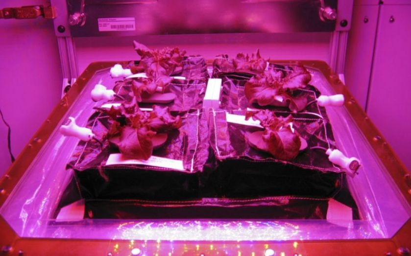 """Astronauts on International Space Station about to harvest first-ever space-grown food, as Nasa develops """"Veggie"""" plant growth chamber"""