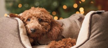 Pets at Home has raised its full year profit guidance after recording impressive sales growth during December.