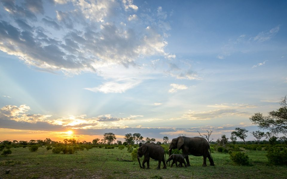 Elephants on the ultimate South African safari