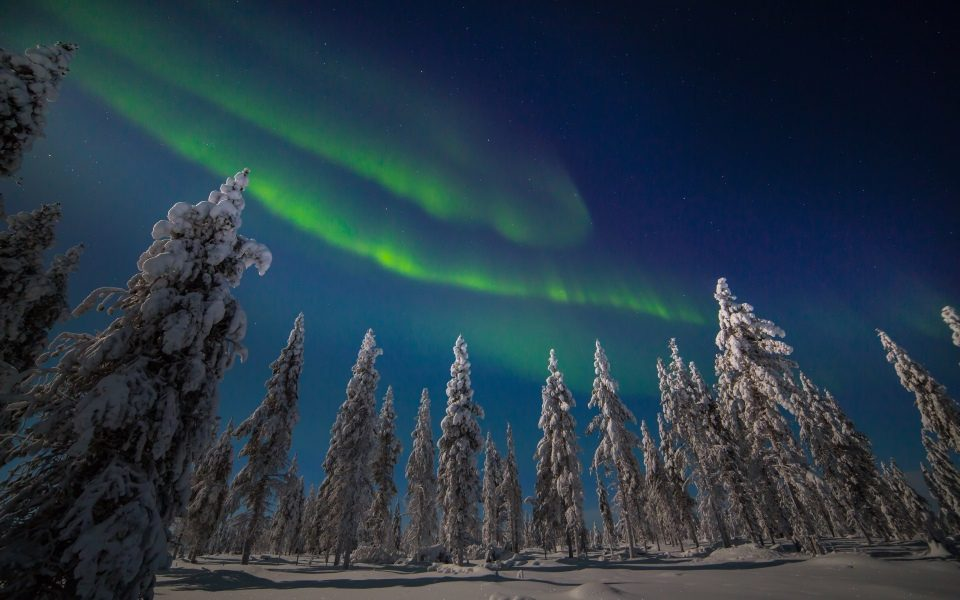 The northern lights over a forest in Finland