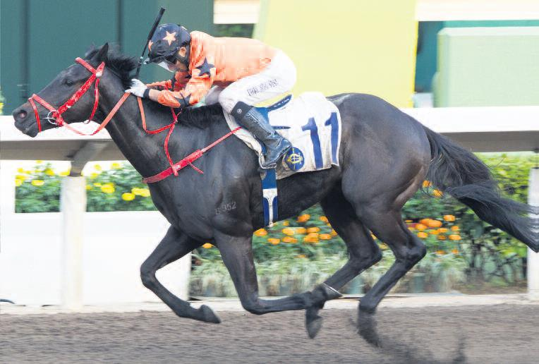 Hong Kong Horse Racing Tips: Lor and Chan have the Spirit to bloom on the all-weather