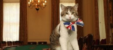 From taxes to cats, Theresa May's government has been an affront to Conservative ideology