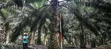 Malaysia offers UK post-Brexit trade deal on palm oil 'rethink'
