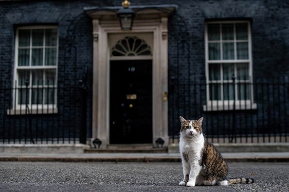 A truly radical and pragmatic Prime Minister would let parliament get a cat
