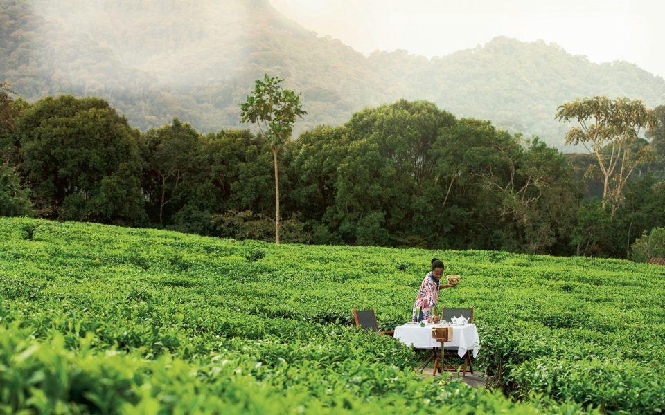 A tea plantation in Rwanda