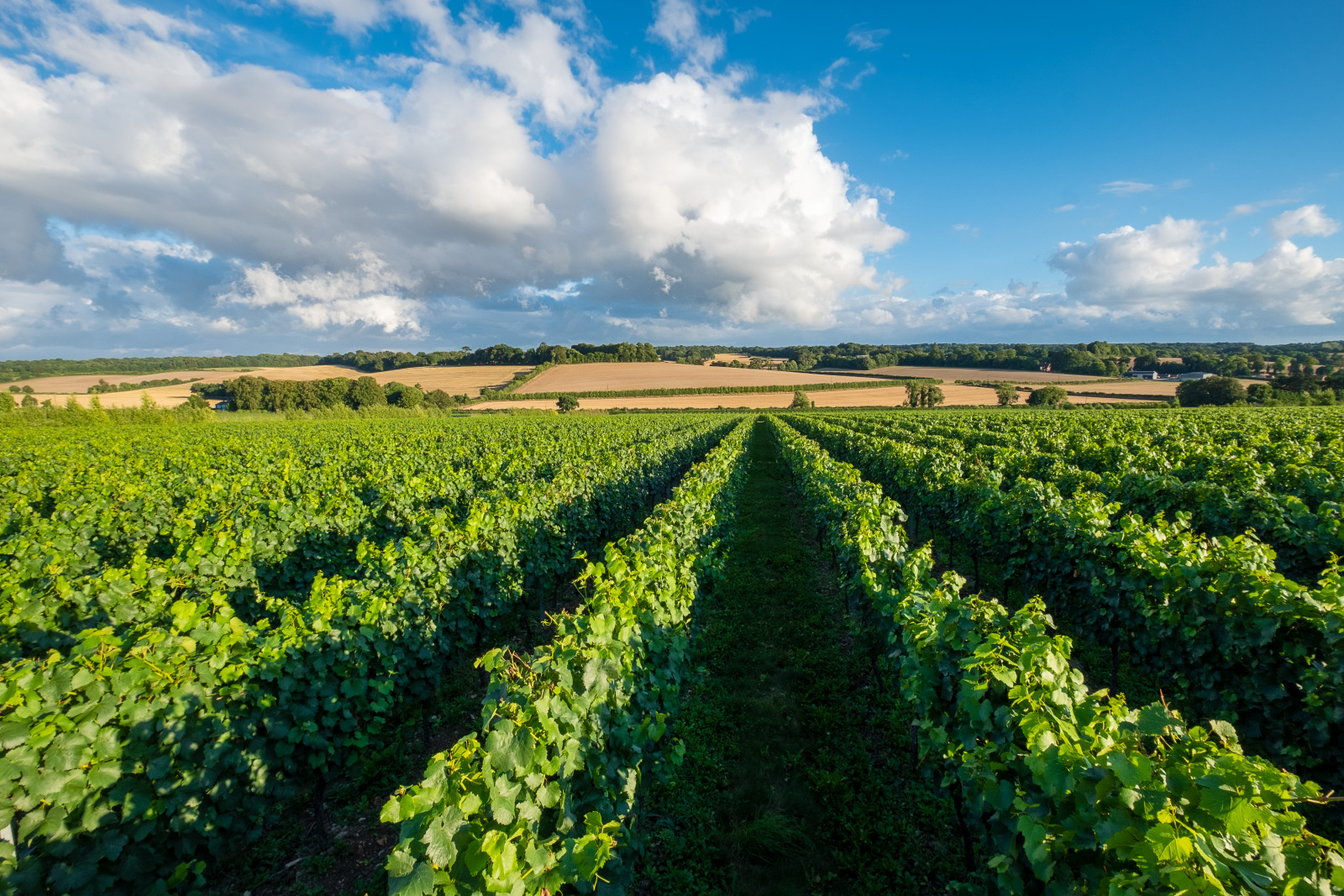 Bubbling over: Meet the English sparkling wine makers beating the French at their own game