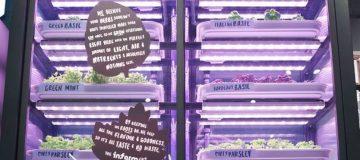 M&S launches urban farming scheme in London stores