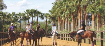 Horses in Polo Valley, Sotogrande