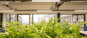 Here's why you should treat your employees like plants