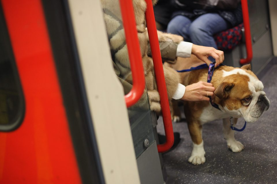 Tube rated the world's most dog-friendly subway system