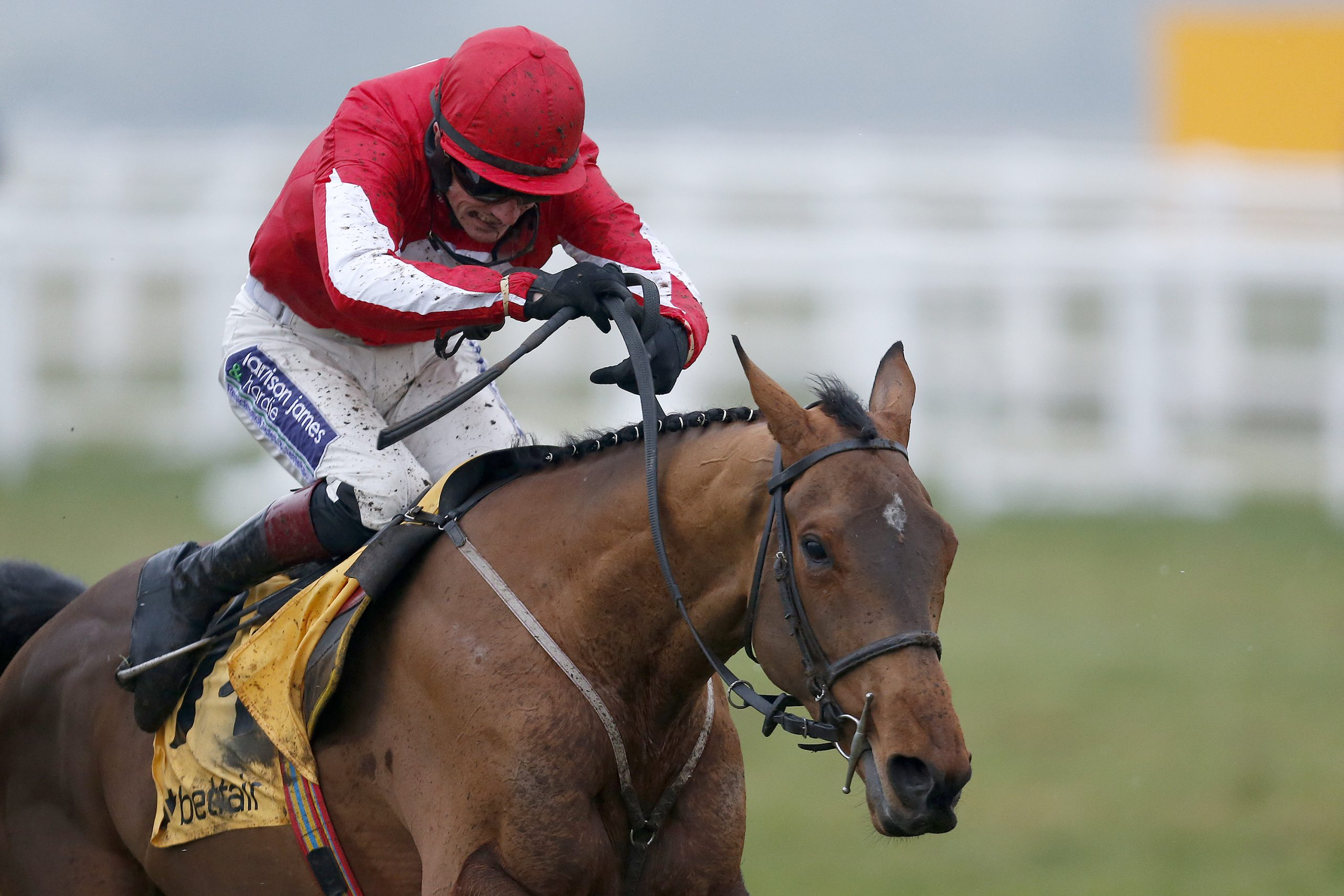 Grandouet champion hurdle betting tab fixed odds betting nzymes
