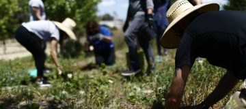 Earth Day Is Celebrated With Forest Therapy Walk And Planting