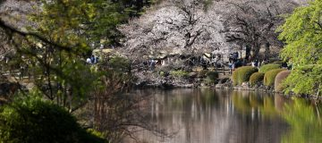 Japan Enjoys Cherry Blossom Season Amid The Continuing Coronavirus Pandemic