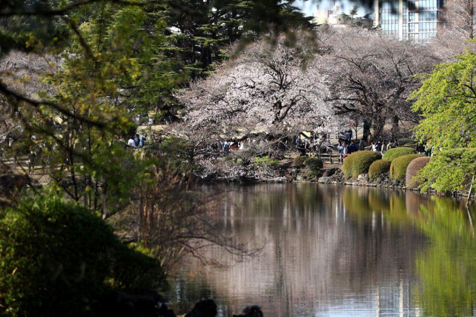 Japan Enjoys Cherry Blossom Season Amid The Continuing Coronavirus Pandemic