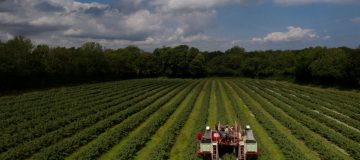 The controversial agriculture bill returns to the House of Commons on Monday for a key vote on the future of the UK's food standards.