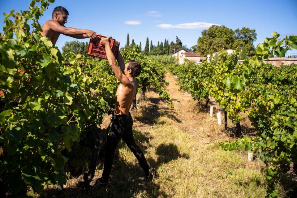 France's Natural Wine Harvest