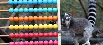 Annual Animal Stocktake At London Zoo