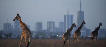 Kenya Open - Previews