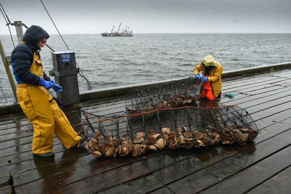 Scottish Fishers Demand Compensation From The UK Government Due To Post-Brexit Losses