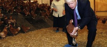 The UK's chicken farmers have become the latest food suppliers to slam the government over new Brexit border rules, which are causing enormous disruption to supply chains.