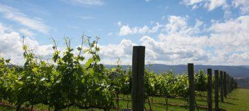 Uruguay is a treasure-trove of fine wines