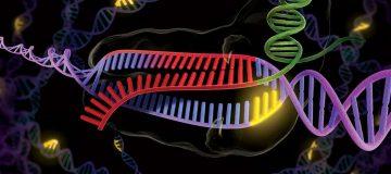 8 weird and wonderful applications of CRISPR technology