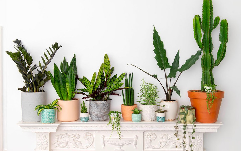 Bloombox Club provides personalised house plant subscriptions
