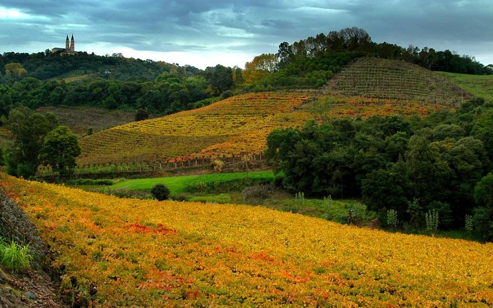 Vineyards growing grapes used in Brazilian wine