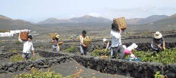 Drinking around the world: Take a trip to Lanzarote, wine paradise