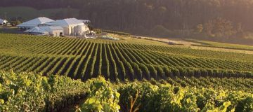 Drinking around the world: Tasmania is a winemaker to watch