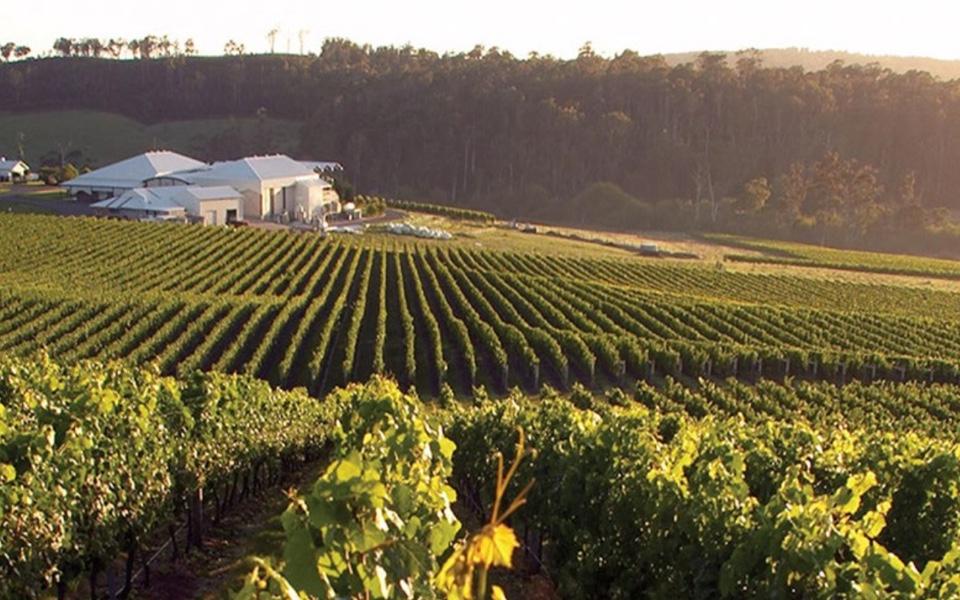 Bay of Fires vineyard in Tasmania