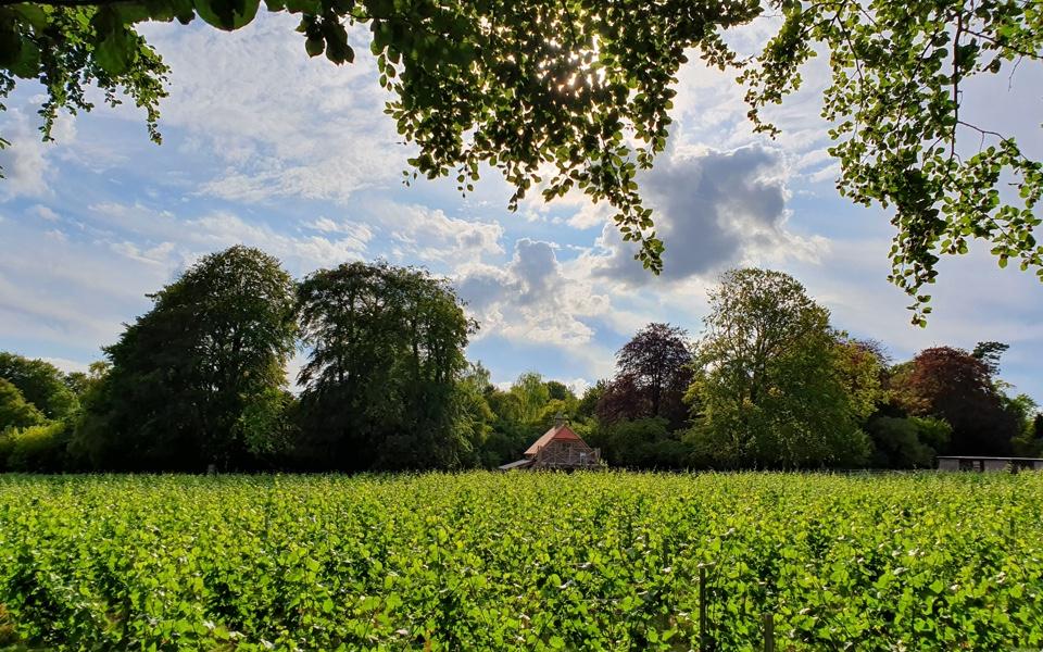 Bluestone Vineyard on the Wiltshire wine trail