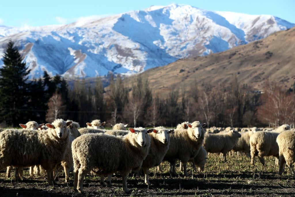Inggris menyegel kesepakatan perdagangan Selandia Baru sebagai batu loncatan menuju kenaikan CPTPP : CityAM